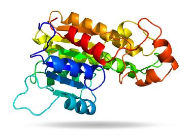 Gadget-ProteinViewer